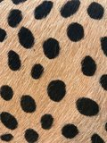 MARNY LEOPARD FURRY SPECIAL LARGE